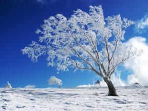 20 wallpapers de invierno para tu escritorio-04