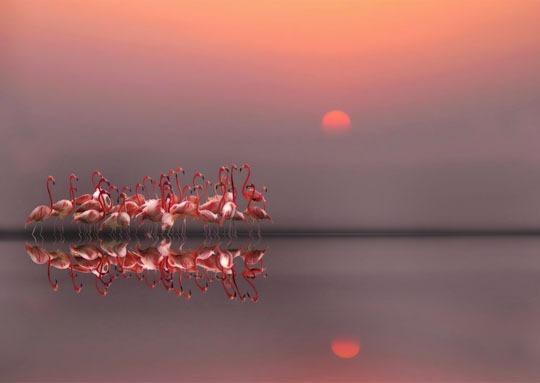 ejemplos asombrosos de Fotografía de Reflexión-01