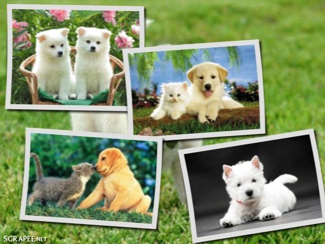La creación de retratos de mascotas mediante el arte de Collage