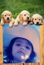 Fotomontaje con tres cachorritos y marco de fotos