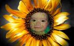 Fotomontaje en una flor de girasol