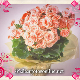pizap-com14756220624181